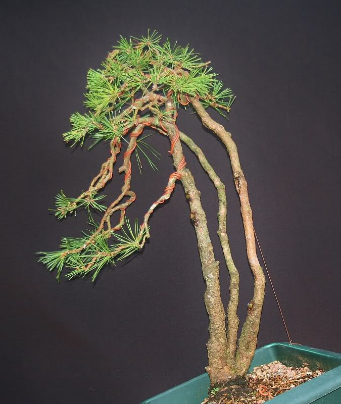 scotts pine raw material - have a virtual play 011675x800