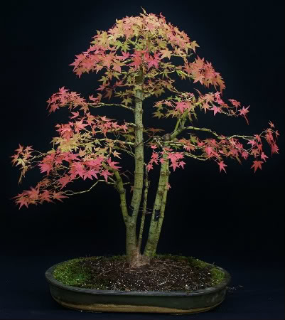 Seasonal September Acer1c1713x800