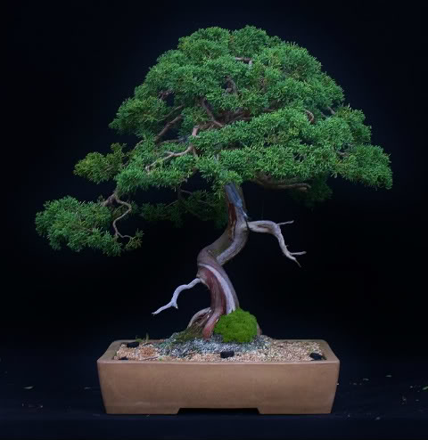 Seasonal September Juniper1cc778x800