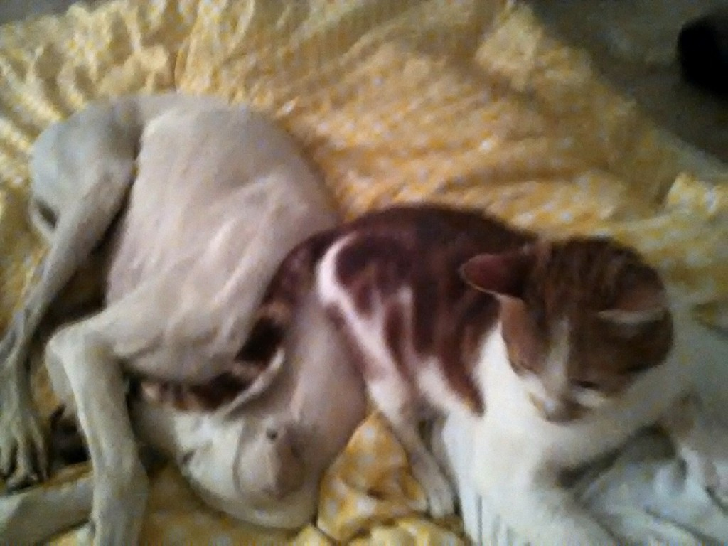 juanita galga mature à l'adoption   Adoptée - Page 9 IMG_20151110_194309_zpsptcom0xs