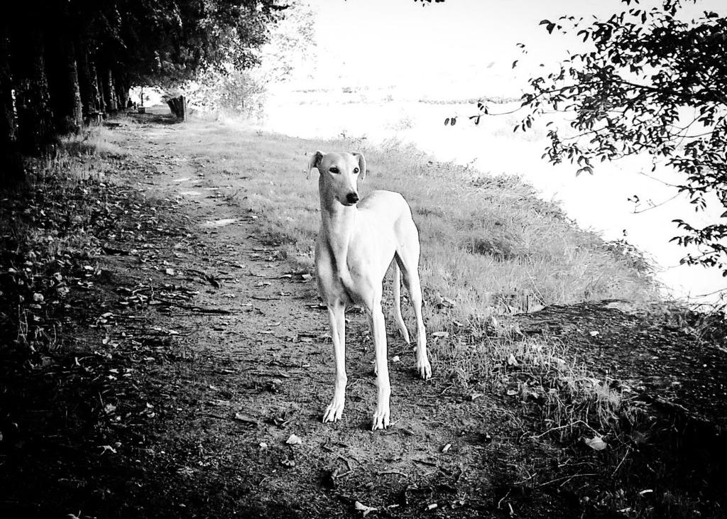 juanita galga mature à l'adoption   Adoptée - Page 9 Temporary_zpspkixlg8x