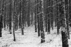Bosque Leid