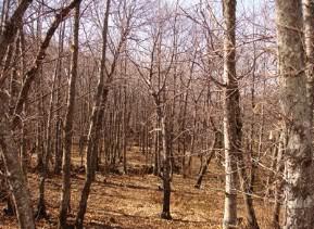 Bosque de Io