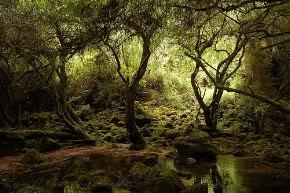 Pantano de Murdoc