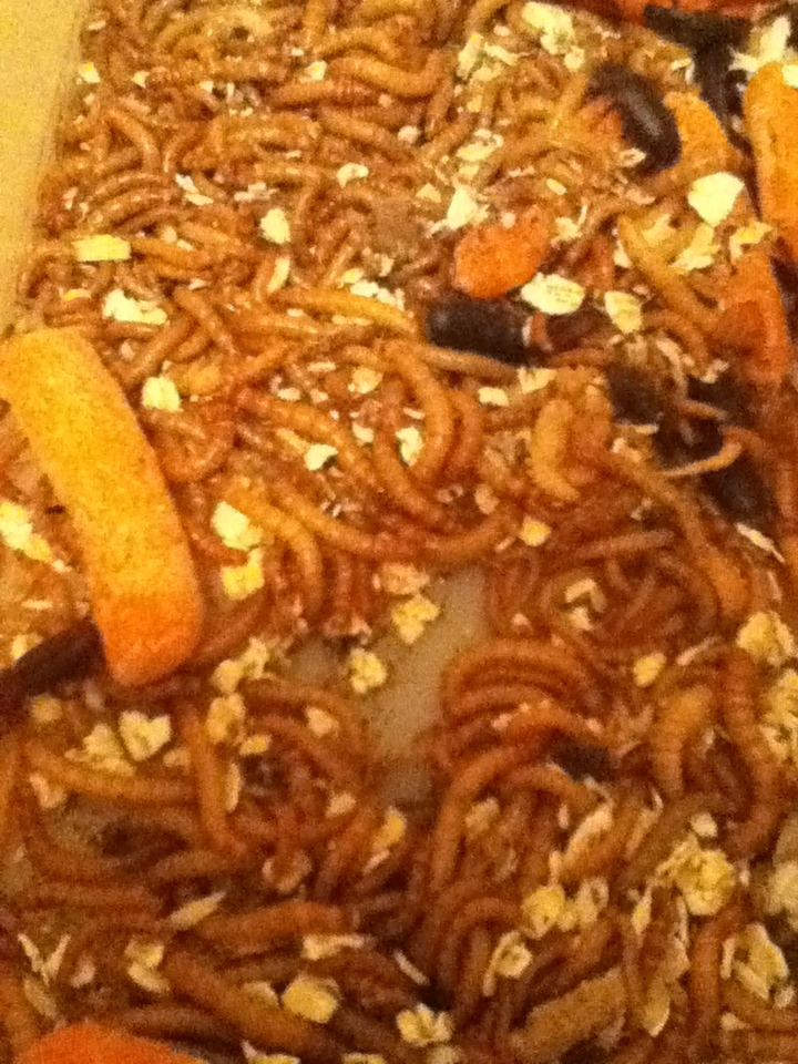 Mealworm Colony 2015! [Picture Thread] IMG_0288_zpsl7jnujcx