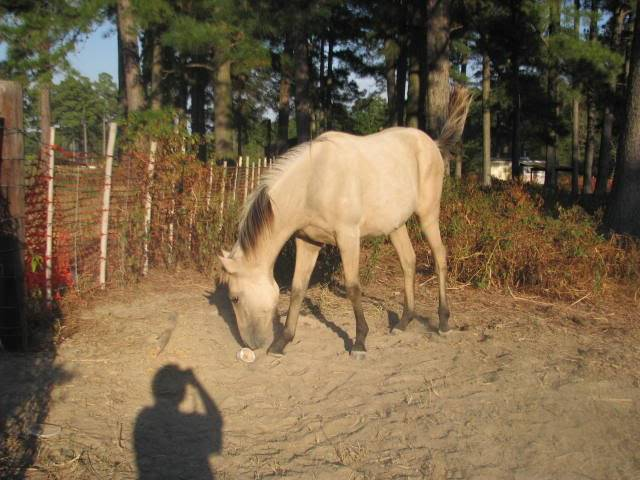 Silver Buckskin? Farm1130