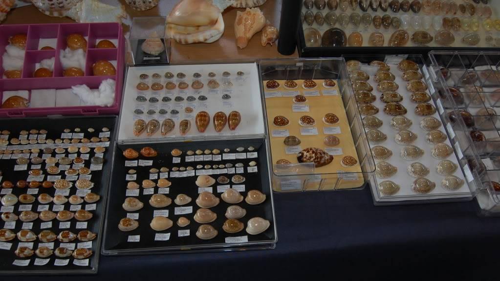 2011 Bourse de Rennes - 4 & 5 juin DSC_6758