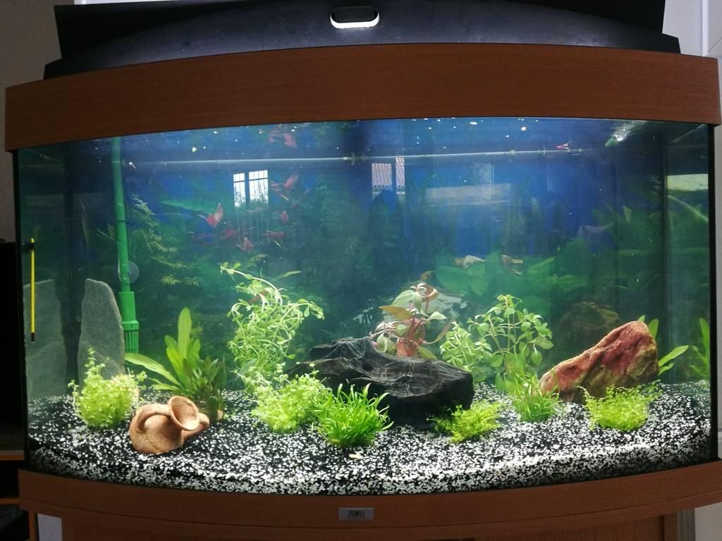 Nouvel aqua rio Juwel 180L - recherche futur pensionnaire ^^ IMG_20180817_200806