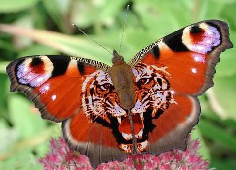 SOCIEDAD Mariposa