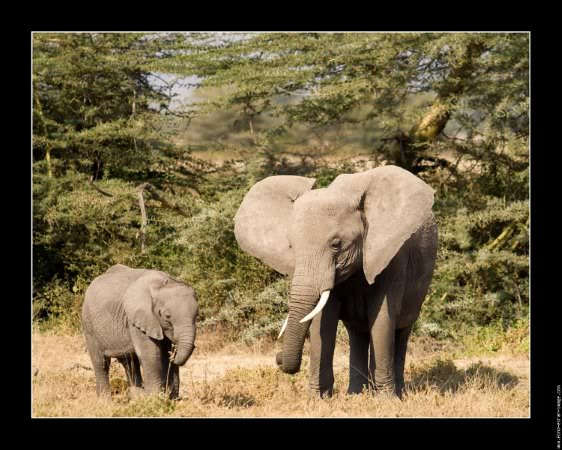 EL MARFIL Galerie-membreelephantphoto-famille-elephant-kenya-01