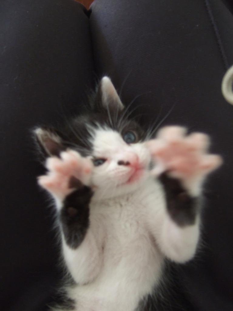 Χαρίζεται η όμορφη Μπέμπα, το θηλυκό ασπρόμαυρο γατάκι που γλύτωσε στο παρά πέντε. Υιοθετήθηκε!!! 15_zps7vbyadfq