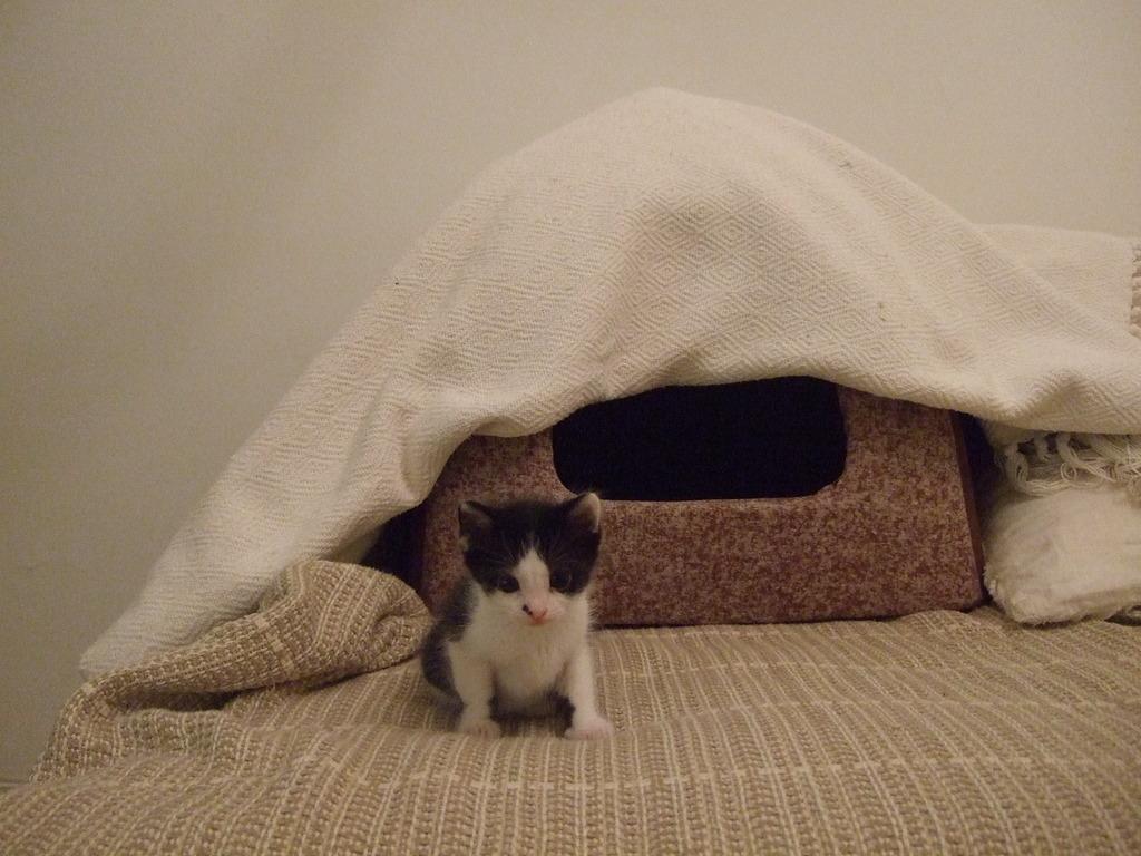 Χαρίζεται η όμορφη Μπέμπα, το θηλυκό ασπρόμαυρο γατάκι που γλύτωσε στο παρά πέντε. Υιοθετήθηκε!!! 16_zps5xdw0koe