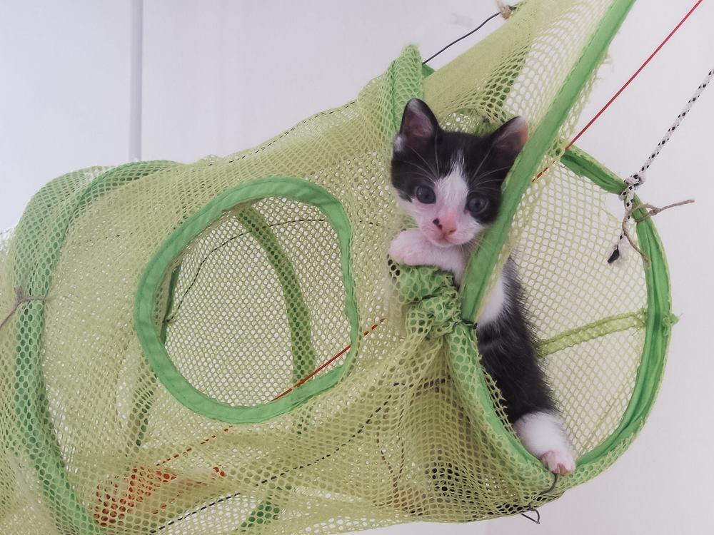 Χαρίζεται η όμορφη Μπέμπα, το θηλυκό ασπρόμαυρο γατάκι που γλύτωσε στο παρά πέντε. Υιοθετήθηκε!!! 2_zpsuemykk0l