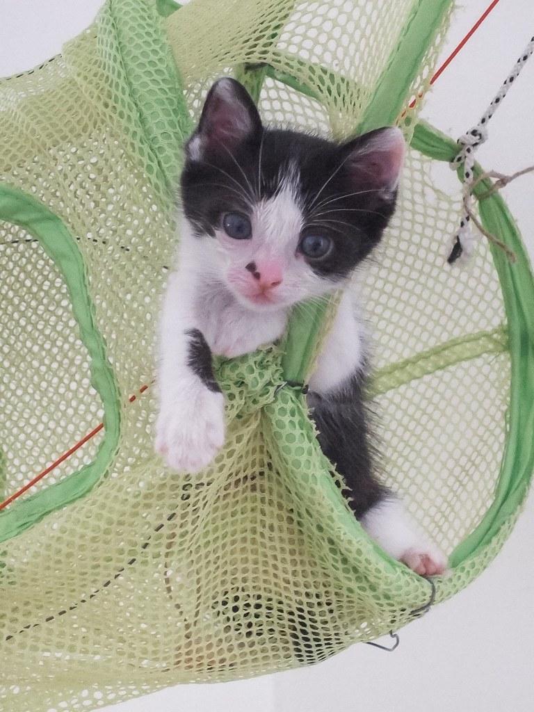 Χαρίζεται η όμορφη Μπέμπα, το θηλυκό ασπρόμαυρο γατάκι που γλύτωσε στο παρά πέντε. Υιοθετήθηκε!!! 6_zpsbg5c0bgp
