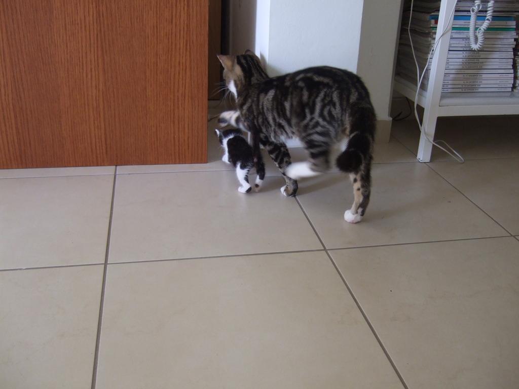 Χαρίζεται η όμορφη Μπέμπα, το θηλυκό ασπρόμαυρο γατάκι που γλύτωσε στο παρά πέντε. Υιοθετήθηκε!!! 8_zpsmkwhyxtm