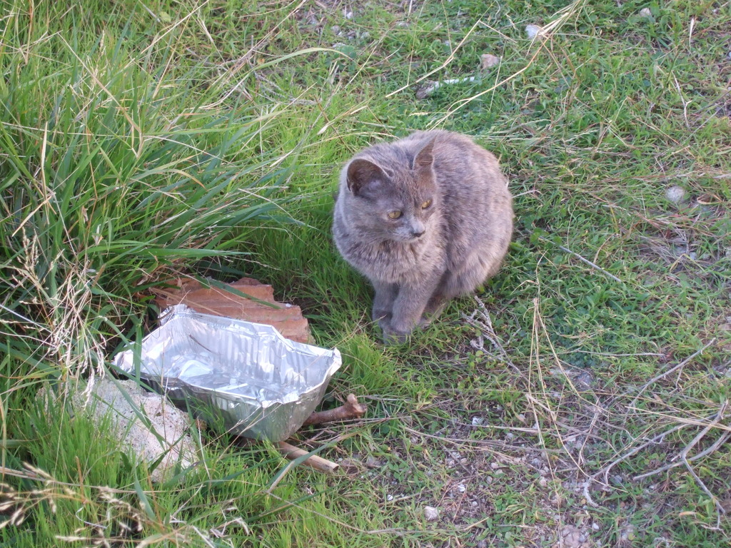 Φίφη , η αδέσποτη μικροκαμωμένη γατούλα με την μεγάλη καρδιά. DSCF1208_zps80bvahuv