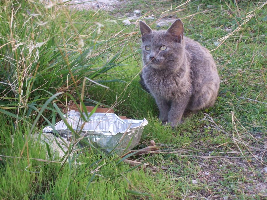 Φίφη , η αδέσποτη μικροκαμωμένη γατούλα με την μεγάλη καρδιά. DSCF1209_zpscogkn9b4