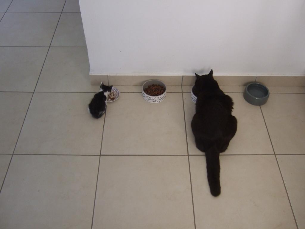 Χαρίζεται η όμορφη Μπέμπα, το θηλυκό ασπρόμαυρο γατάκι που γλύτωσε στο παρά πέντε. Υιοθετήθηκε!!! DSCF2042_zpsb7dmgs3n
