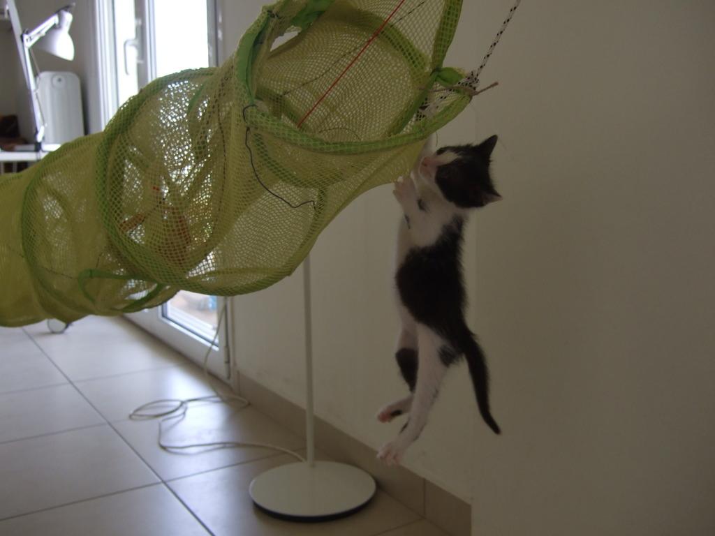 Χαρίζεται η όμορφη Μπέμπα, το θηλυκό ασπρόμαυρο γατάκι που γλύτωσε στο παρά πέντε. Υιοθετήθηκε!!! DSCF2130_zps4ptoalft