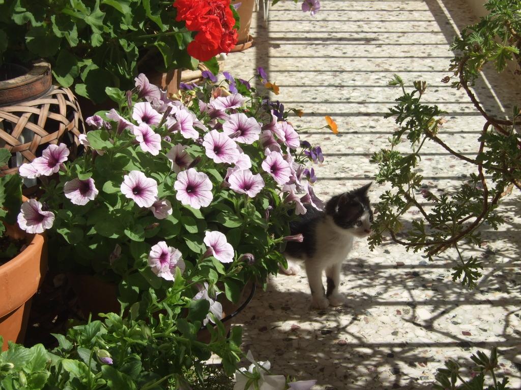 Χαρίζεται η όμορφη Μπέμπα, το θηλυκό ασπρόμαυρο γατάκι που γλύτωσε στο παρά πέντε. Υιοθετήθηκε!!! DSCF2309_zpsyqy7xoel
