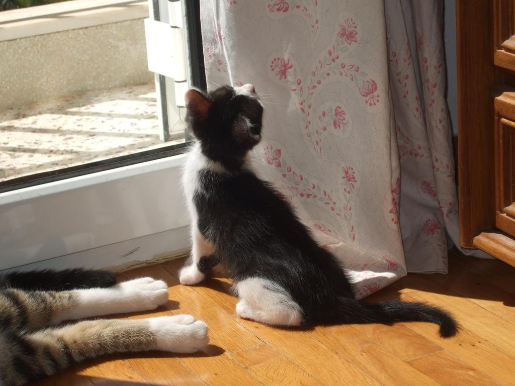 Χαρίζεται η όμορφη Μπέμπα, το θηλυκό ασπρόμαυρο γατάκι που γλύτωσε στο παρά πέντε. Υιοθετήθηκε!!! DSCF2391_zpsqcpu8ejg