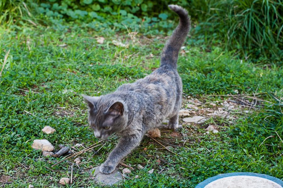 Φίφη , η αδέσποτη μικροκαμωμένη γατούλα με την μεγάλη καρδιά. Fifi_zps7cnix9eo