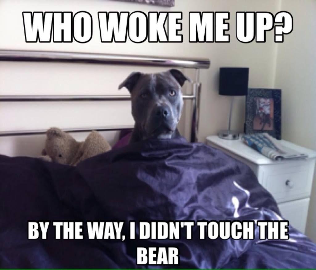 Who woke me up 1606480_10152142590418288_569421425_o