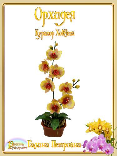 Галерея выпускников - Орхидея - лепка из холодного фарфора  Ee0770021b318d4355c4cc922f65b174