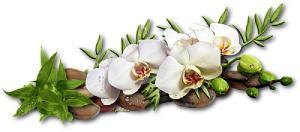 Галерея выпускников - Орхидея - лепка из холодного фарфора  Ed38c3057c07125e3c5ca91672488fb3