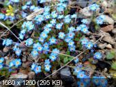 "Фотоконкурс ""Вестники весны"" _d5a6a23276ae71ad7ba94bebe408543d"