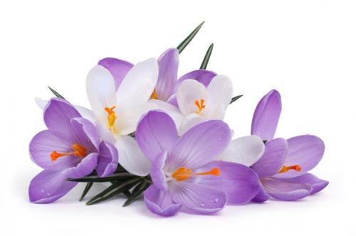"""Поздравление. Фотоконкурс """"Вестники весны"""" 04b64f1296105e6dc43728c5525f26d4"""