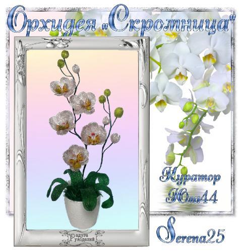 "Галерея выпускников Орхидея ""Скромница"" _04b6d49239077e0755a0a3efac243324"