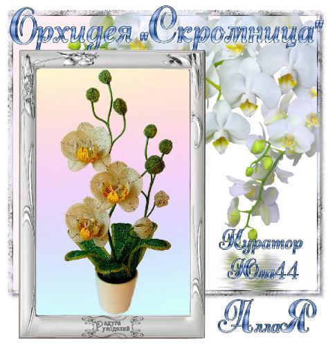 """Галерея выпускников Орхидея """"Скромница"""" _8e8a61f96e8acd154d5d8f106ad11526"""
