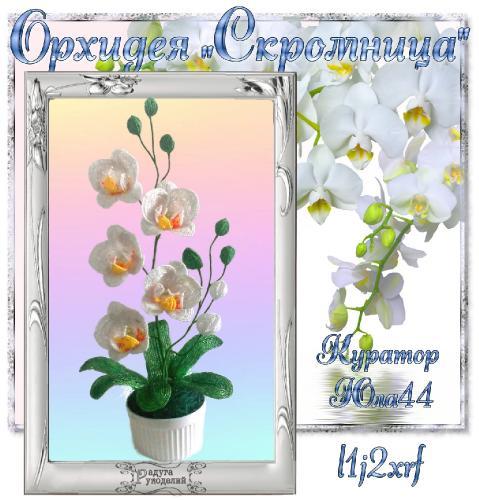 "Галерея выпускников Орхидея ""Скромница"" _514a12d9fe85b0c82ce4fd5f2cf6cd45"