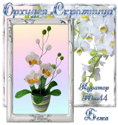 "Галерея выпускников Орхидея ""Скромница"" _f040680423810458d0871e726a19a94d"