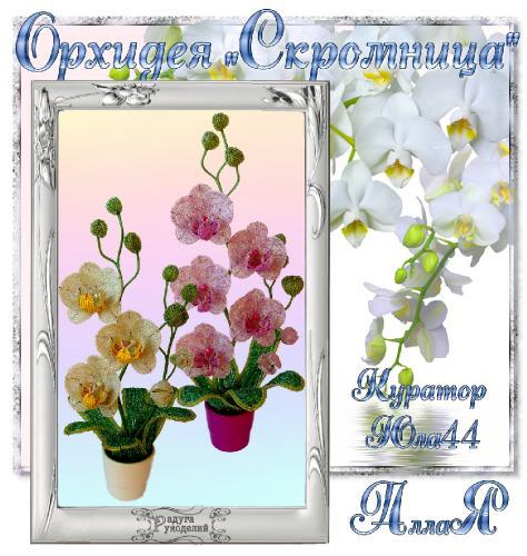 "Галерея выпускников Орхидея ""Скромница"" _dac3abd49f4376cbab930edd9118c85f"