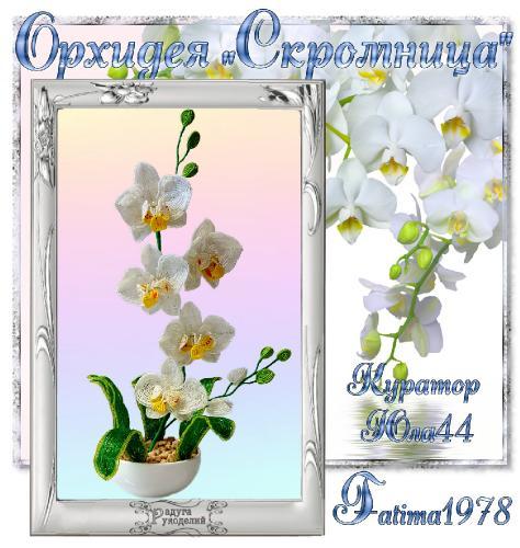 "Галерея выпускников Орхидея ""Скромница"" _6a6072f35da4bd54b320ed92af083b93"