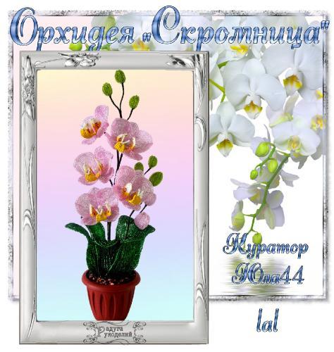 """Галерея выпускников Орхидея """"Скромница"""" _7cc5a939eb20a0549e5ddb9333396fab"""