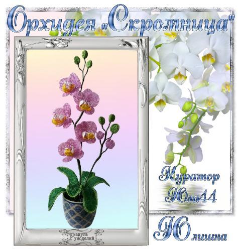 "Галерея выпускников Орхидея ""Скромница"" _d79aea44e6a09c317ecfa8ab661b4db1"