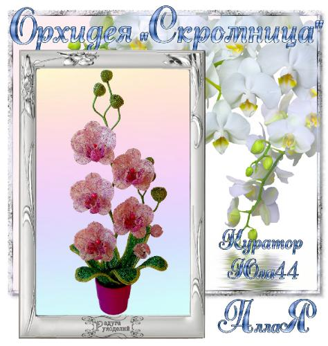 "Галерея выпускников Орхидея ""Скромница"" _2acc05e88f6fe21946d207b0ddf322b6"