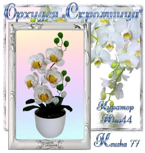 "Галерея выпускников Орхидея ""Скромница"" _f133570b04b1b88722da886d28e35bc1"