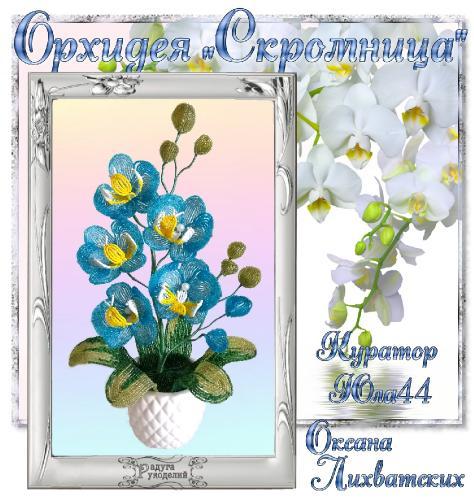 "Галерея выпускников Орхидея ""Скромница"" _13fd5b4b78b233244e496036d351accf"