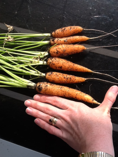 Carrot Week 2012! - Page 16 8de57adb996a73e148b39ac92b5cfd65