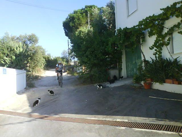 Barragem Castelo de Bode - 23/07/2011 - Em busca do Crocodilo que virou peixe gato DSC03376