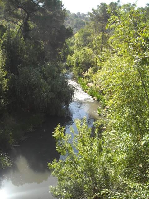 Barragem Castelo de Bode - 23/07/2011 - Em busca do Crocodilo que virou peixe gato DSCN5399