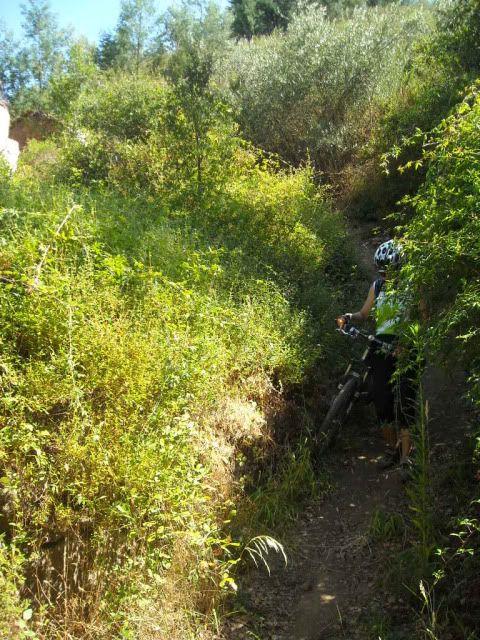Barragem Castelo de Bode - 23/07/2011 - Em busca do Crocodilo que virou peixe gato DSCN5428