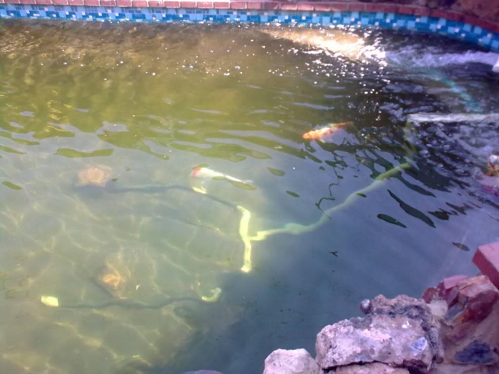 vordering met water kwaliteit Image0338