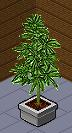 Weed Stuff WeedPlant