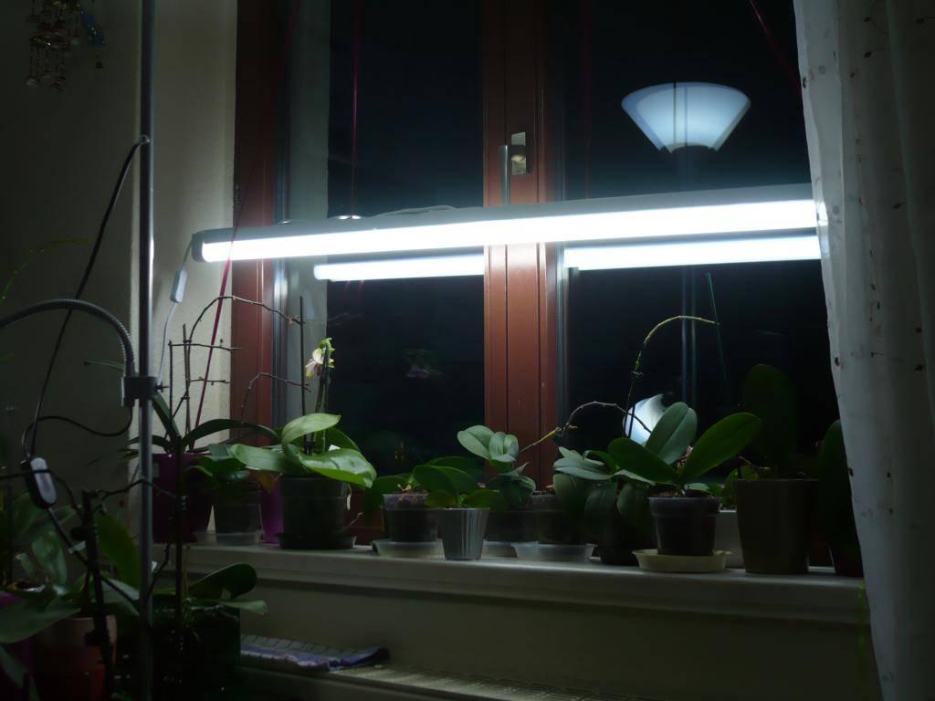 Günstige Alternative für Zusatzlicht im Winter P1060136_zps40a85824