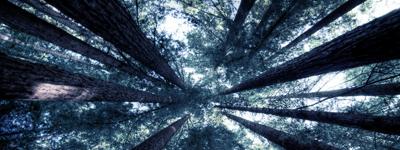 Ember Forest